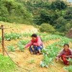 Système de goutte à goutte artisanal pour l'irrigation.